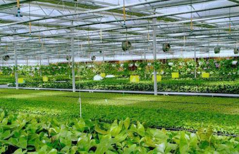 黄山雨田农业科技示范园