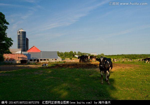 中宁县大战场镇奶牛园区