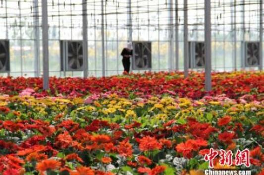 昌吉农业科技园区