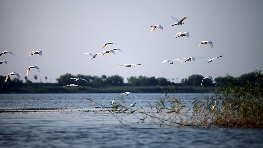 河北衡水湖国家级自然保护区