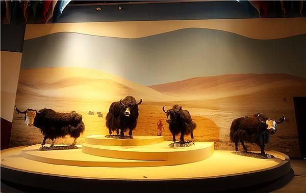 西藏牦牛博物馆