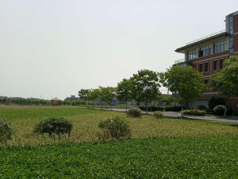 张家港锦丰锦阳创新产业园3000平标准厂房低价出租,园区基础设施配套齐全环境优美长期稳定